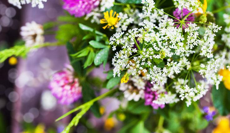 2e7abfda8d Výrazný kvet na hrubej stonke je symbolom nádhery a veľkej hodnoty.