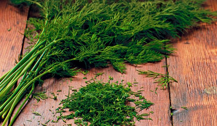 Kakukkfű, menta, kapor – gyógynövények az egészség szolgálatában